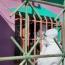 Coronavirus en Jujuy: El lunes arrancó con 42 nuevos casos positivos