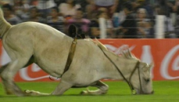 La Cultura del Maltrato: Mataron a un caballo que se lesionó durante la jineteada de Jesús María
